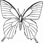 Schmetterling Vorlage 14