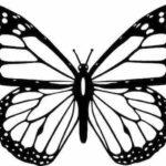 Schmetterling Vorlage 2