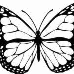 Schmetterling Vorlage 3
