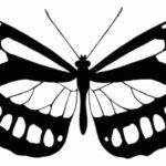 Schmetterling Vorlage 6